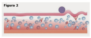Figura 2: Corte vertical do tecido mostrando a dispersão do gás carbonico no tecido adiposo, com o aumento da circulação sanguínea e o efeito lipolítico.